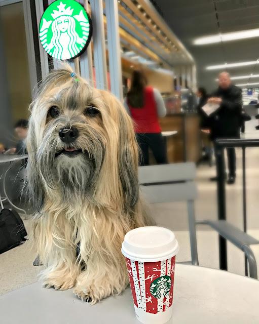 Dogs at Starbucks