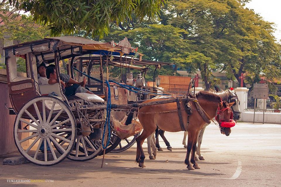 Calesa horses in Vigan