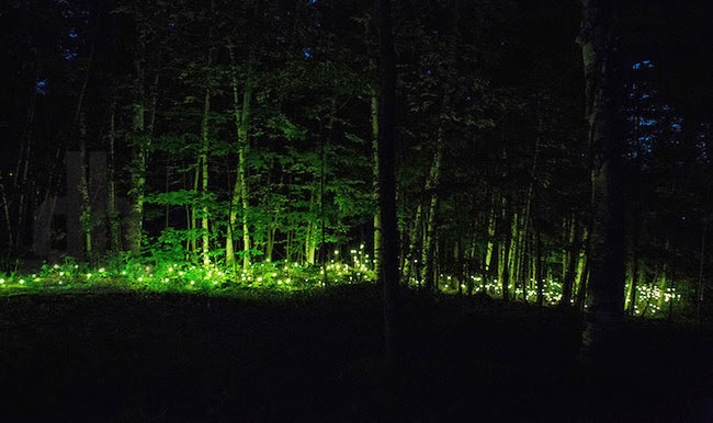 2. ...if you dare! - Am I Dreaming? This Park Turns Into An Illuminated Forest At Night.