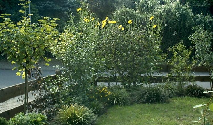 Garten mit Einblick - hier hilft eine Hecke