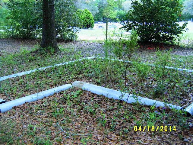 Alabama Rose And Flower Garden From A Non Green Thumb