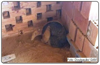 O tamanduá-mirim foi encontrado por funcionários da empresa durante a madrugada desta segunda.