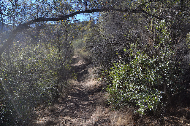some overhead branches as the trail heads out onto a grassy hillside
