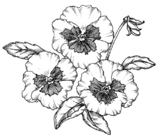 Pictures Of Flowers Drawings