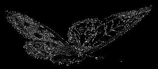 butterfly digital image stock