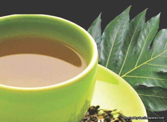 Cara membuat teh sukun