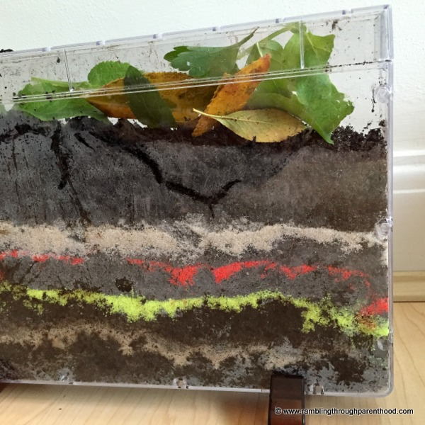 We have noticed lots of tunnels and burrows in the soil of Worm World