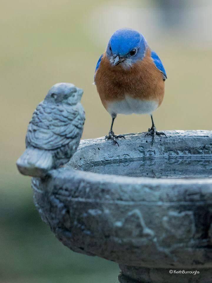 Trate bem seu visitante passarinho!
