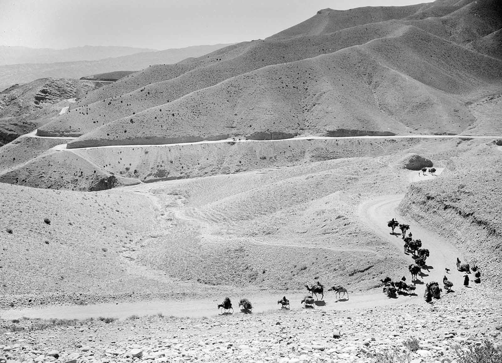 A caravan of mules and camels cross the high, winding trails of the Lataband Pass in Afghanistan on the way to Kabul, on October 8, 1949.