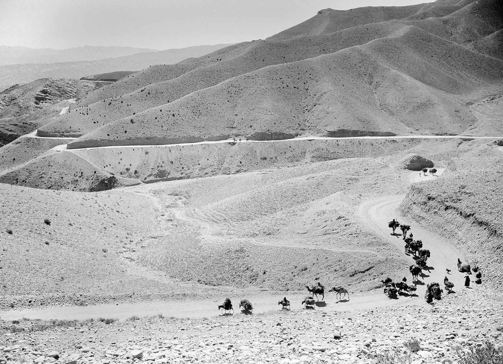 Una caravana de mulas y camellos cruzan los altos y sinuosos senderos del Paso de Lataband en Afganistán en el camino a Kabul, el 8 de octubre de 1949.