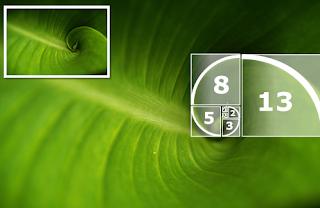 Técnica para ganhar na Lotomania com números de Fibonacci
