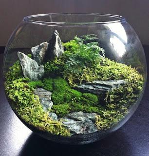Cara Membuat Miniatur Ekosistem Hutan