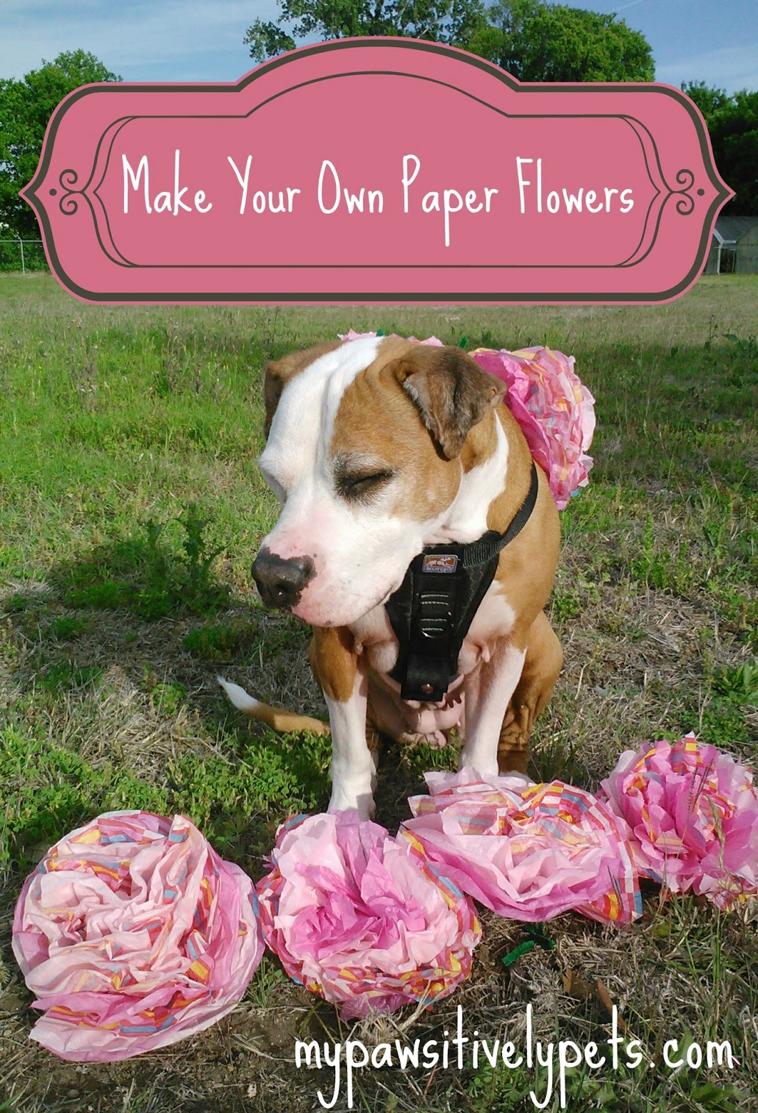 Happy Cinco De Mayo Create Your Own Paper Flowers For Your Dogs