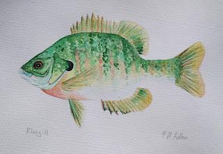 Bluegill, Sunfish, Pat Kellner, P. H. Kellner, Fishing Art, Fly Fishing Art, Texas Freshwater Fly Fishing, TFFF, Fly Fishing Texas, Texas Fly Fishing