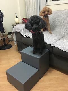 escadinha cães