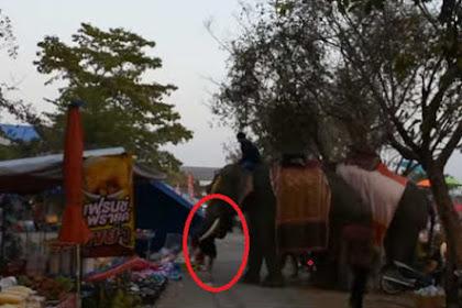 Mengerikan, Gajah Mengamuk Hancurkan 4 Kios Sambil Bawa Gadis Remaja