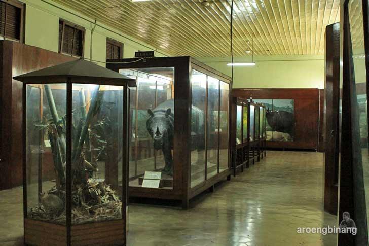 badak banteng harimau museum zoologi bogor