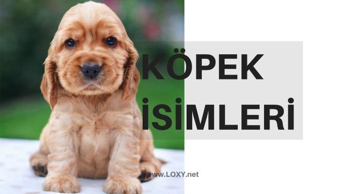 Köpek İsimleri - Erkek ve Dişi Köpek İsimleri 2019