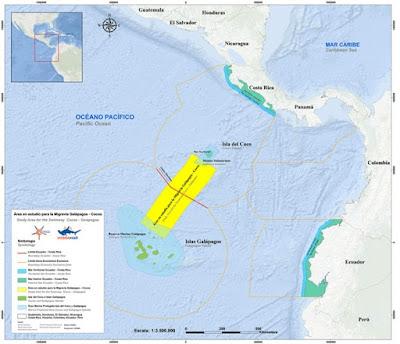 Jalur Jalan Raya Hiu Dan Ikan Lainnya Ditemukan Di Pasifik