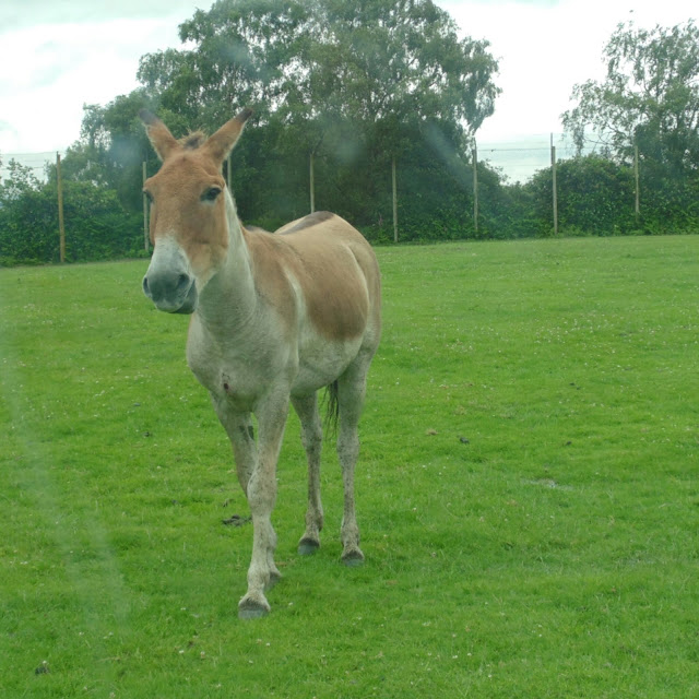 Knowsley safari park,