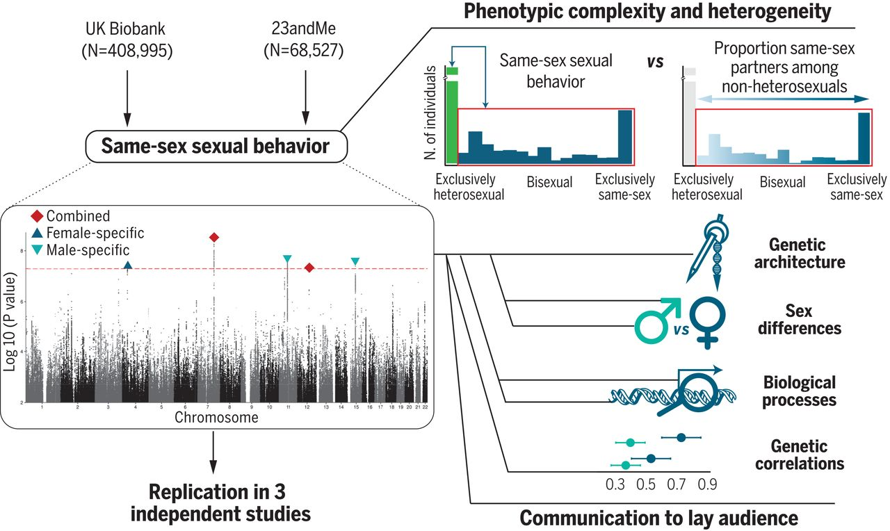 No single 'gay gene', but study finds genetic links to sexual behaviour