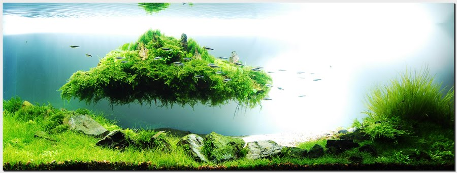 Pics Collection of Truly Inspired Aquascape | kinds of ...