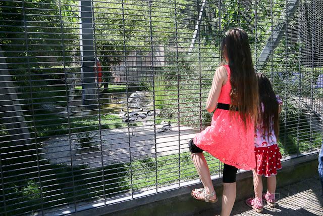 Vögel im Luisenpark Mannheim