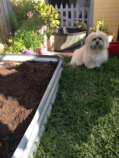 Trixie the Garden Foreman