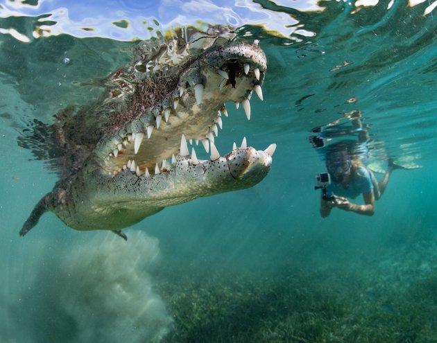 Gadis Selamba Berenang Dengan Buaya