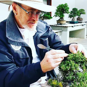 Man trimming a bonsai tree.