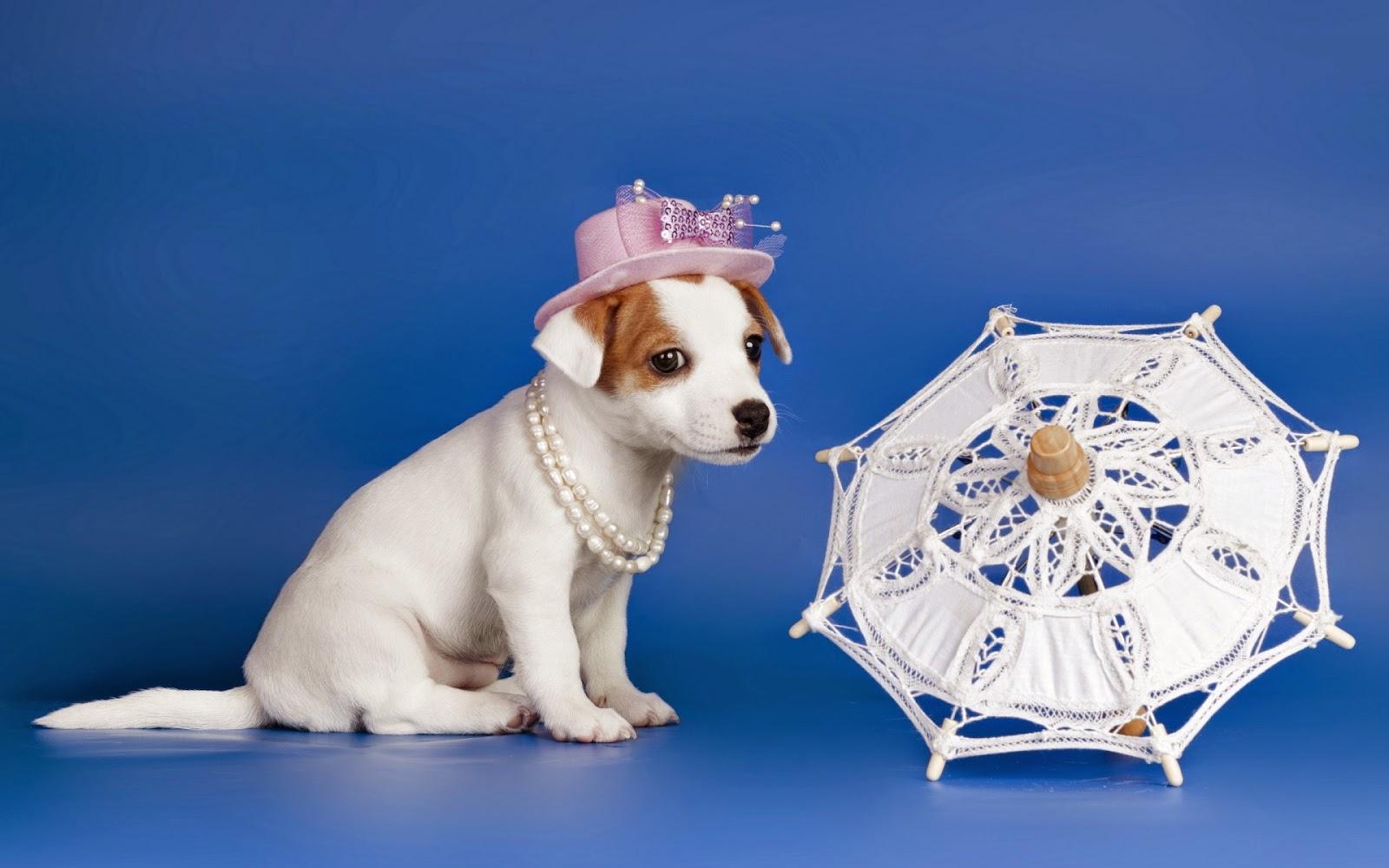Hond op de foto met hoedje en parasol