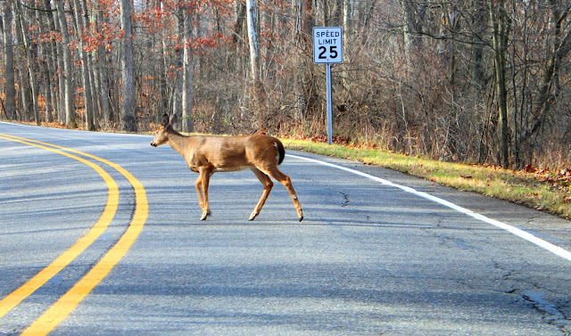 Tips For Driving Safely Around Deer