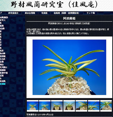 http://www.fuuran.jp/jiman_awanisikihime.html