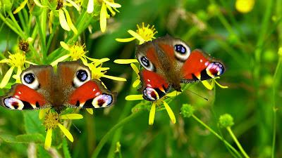 A menina e a borboleta