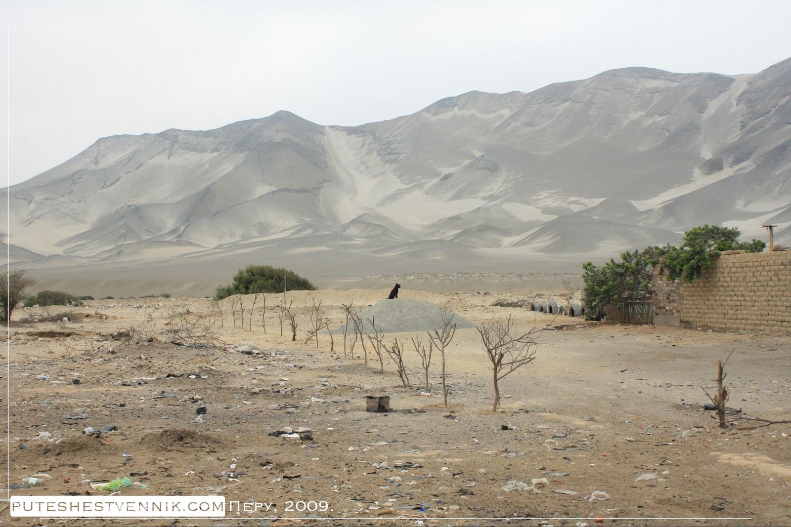 Собака и высокие дюны в Перу