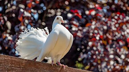 White Dove iPad