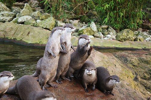 Cute Otter Wallpaper Funny Animal 09 05 11