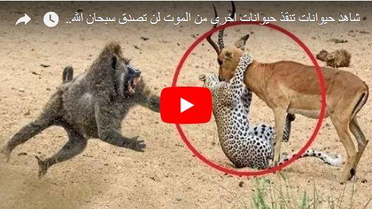 شاهد حيوانات تنقذ حيوانات اخرى من الموت لن تصدق سبحان الله !