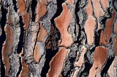 Les forêts sont menacées de détérioration