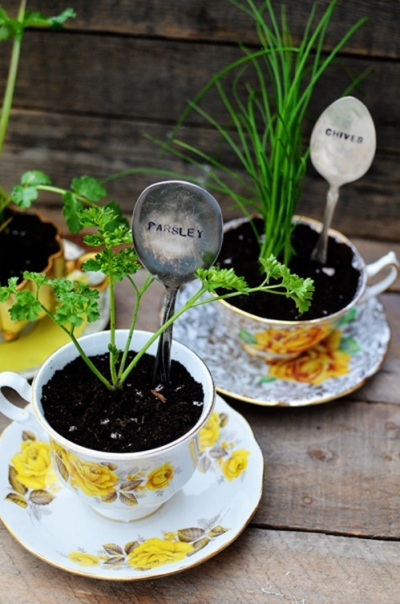 Pot tanaman dari cangkir