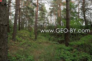 Лес у деревни Коловка