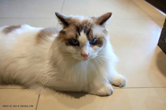 MG 0065 - 台中南區│山本屋日式拉麵。有貓掌蛋的拉麵也太療癒!還有萌萌店貓陪你一起玩喔!