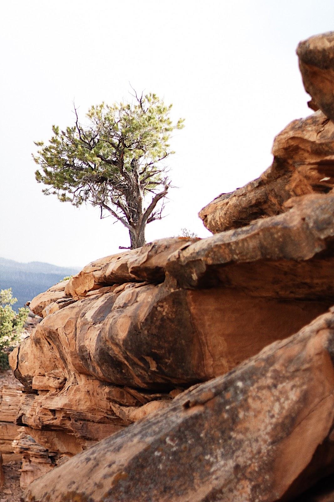 gorgeous tree torrey utah