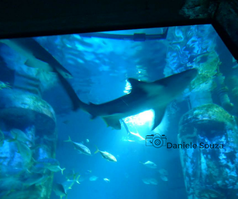 Tubarões no aquário de Londres - Sea life