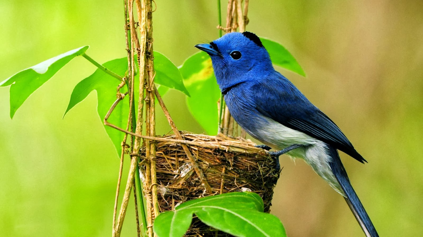 Beautiful Nice And Lovely Birds Images
