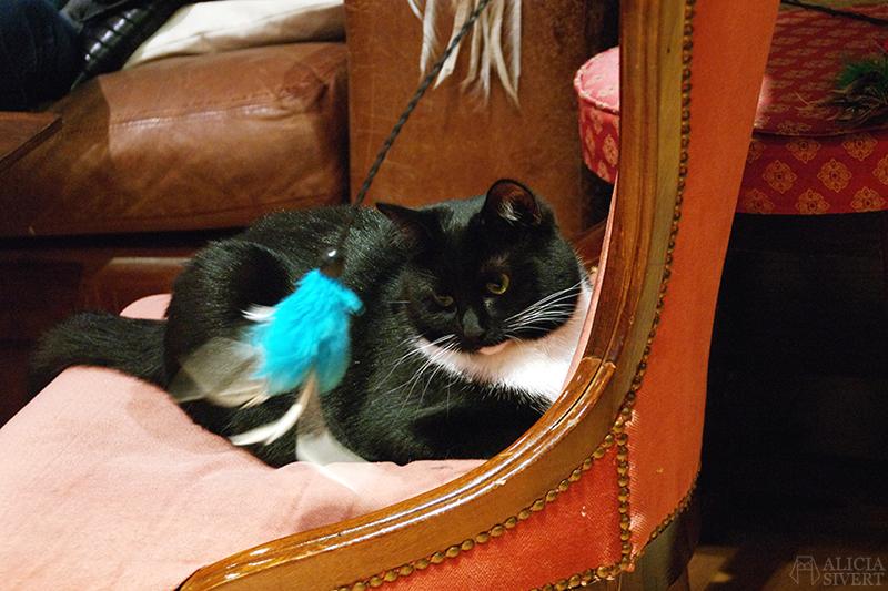 semester resa london england att göra utflykt utflyktsmål cat café kattcafé katt kaffe café katter cats fika see and do