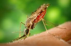 india sets 2030 as target to eradicate malaria