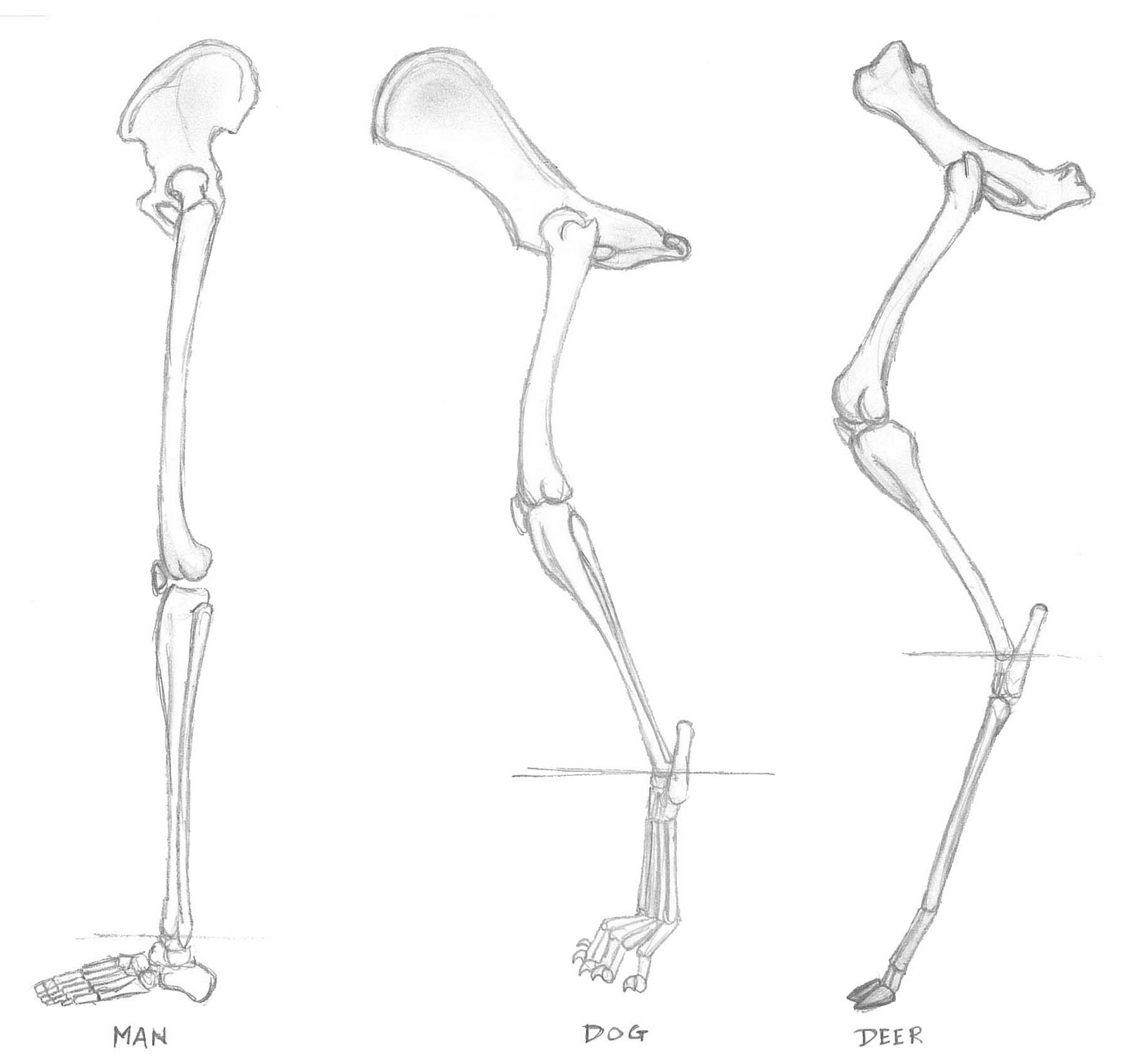 Can A Dog Have Chicken Bones