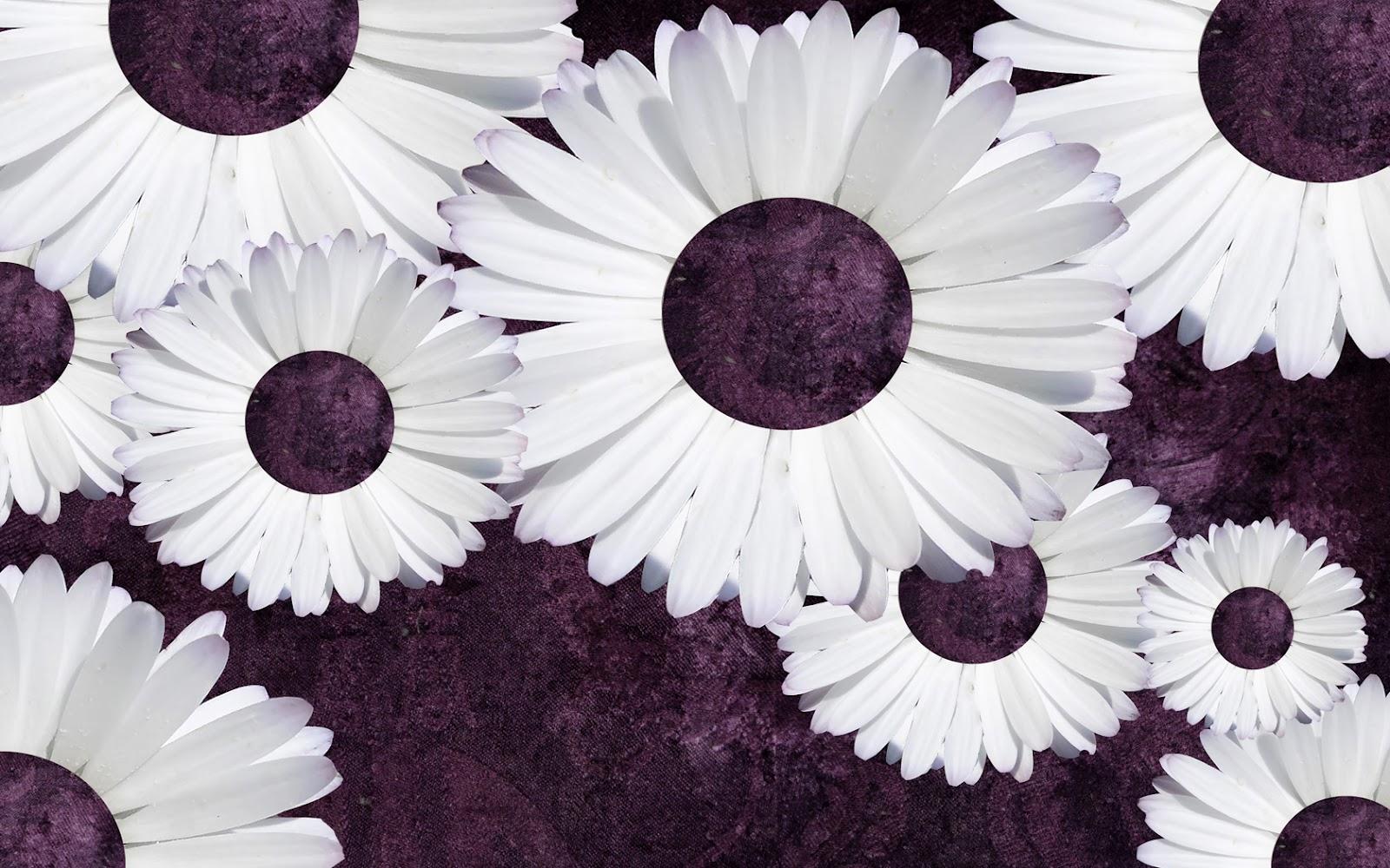 Purple Daisies Tumblr