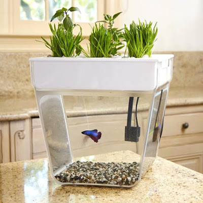 Countertop Aquaponics System : Water Garden : The Water Garden is a self-cleaning fish tank that ...